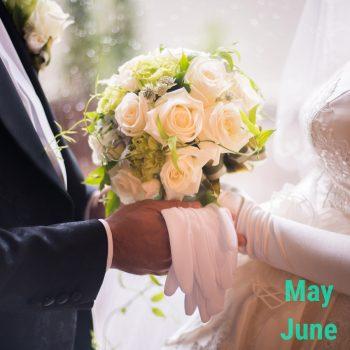 5月6月限定プラン